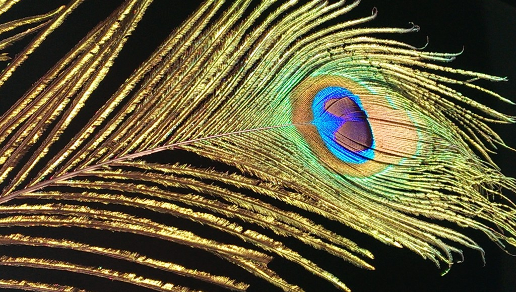 """""""Peacock Feather"""""""